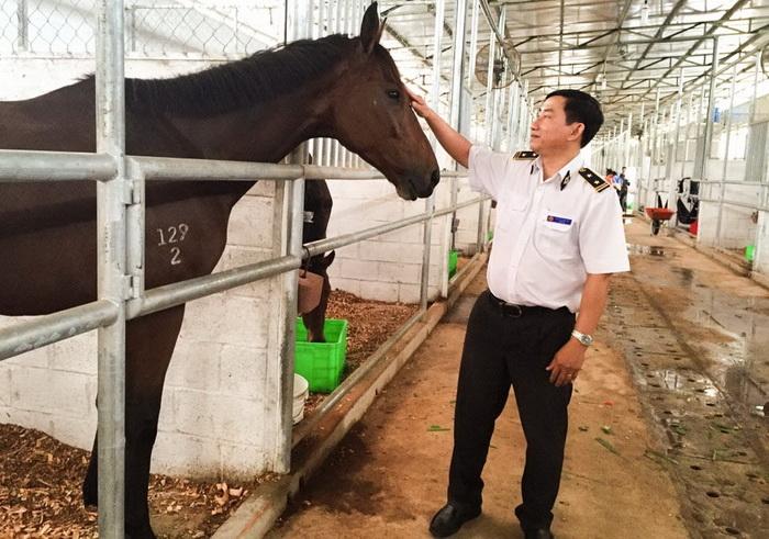 Kiểm dịch ngựa đua nhập khẩu tại Công ty Cổ phần Đại Nam