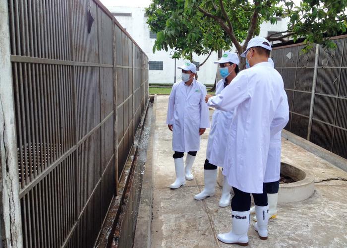 Lấy mẫu khảo sát bệnh trên khỉ phục vụ xuất khẩu